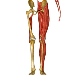 Hip Flexor Mobility on Performance